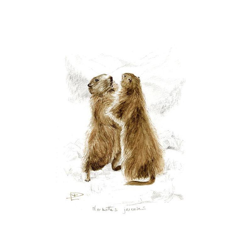 Toile Marmottes joyeuses 38*55