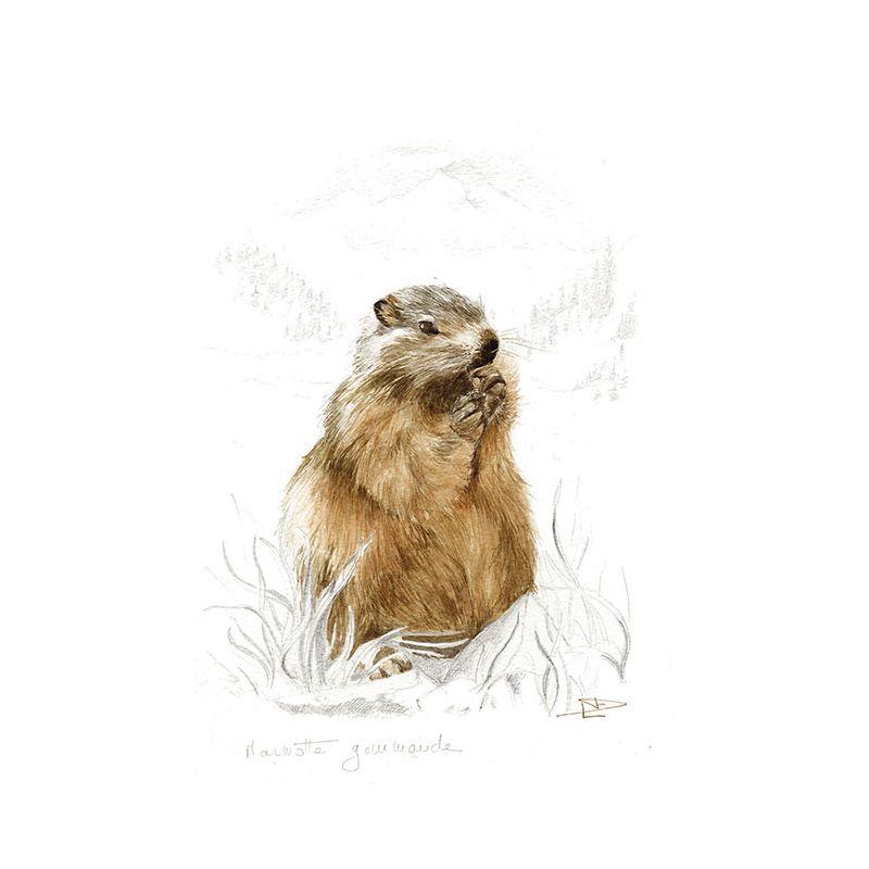 Toile Marmotte gourmande