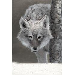 Tableau loup gris nature 1 toile loup gris