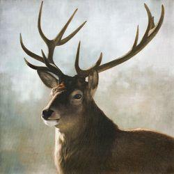 Tableau Portrait de cerf