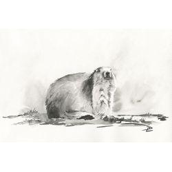 Toile Marmotte