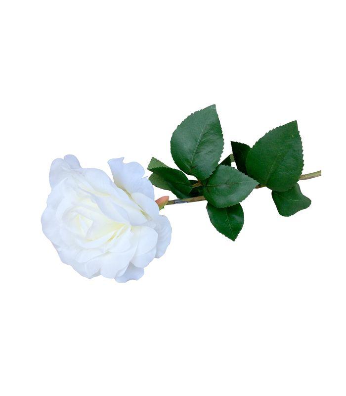 Rose crème H60