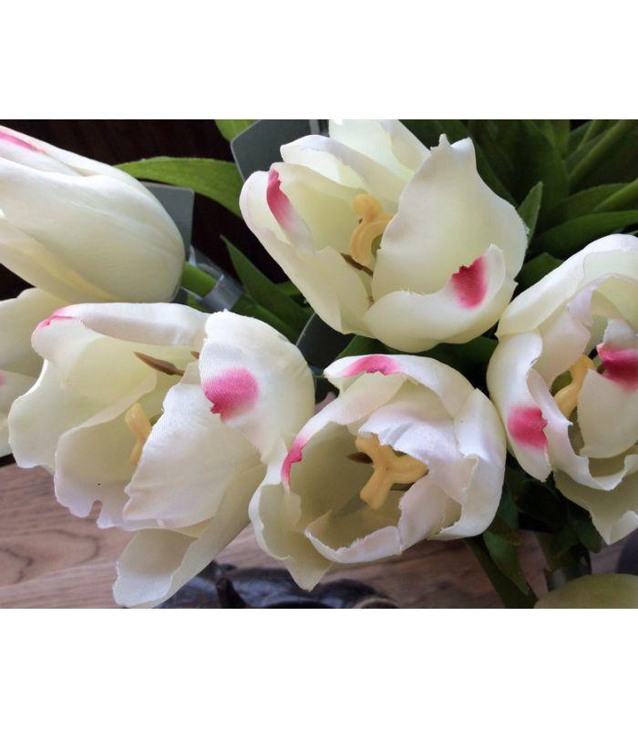 Tulipe crème H36