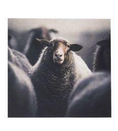 Tableau velours moutons