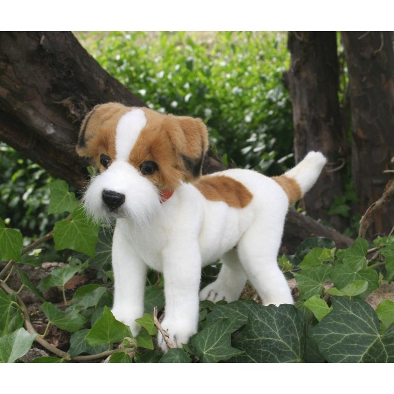 Jack Russel taille 20 cm